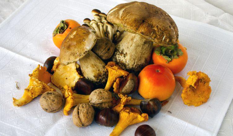 Ricette per cucinare i funghi